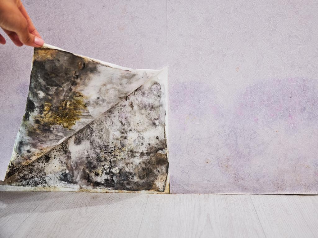 Tinta impermeabilizante: a melhor opção para evitar mofo nas paredes